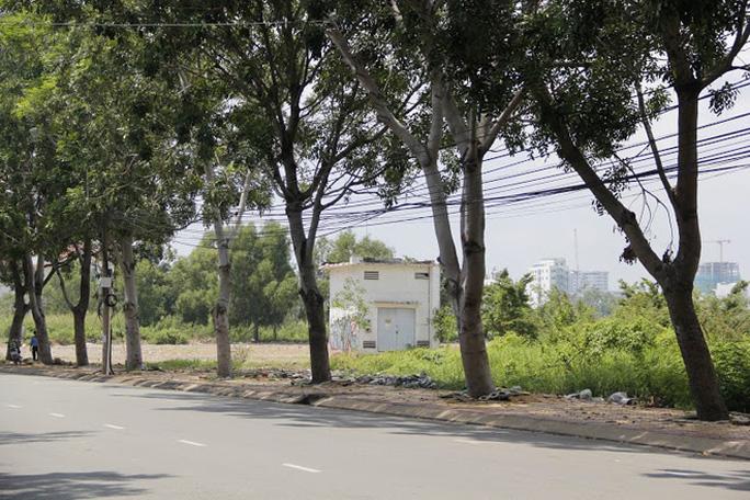 Các cây được đề xuất đốn bỏ chủ yếu có bộ rễ nổi làm nứt vỉa hè, cây nghiêng ra đường và có nguy cơ ngã đổ.