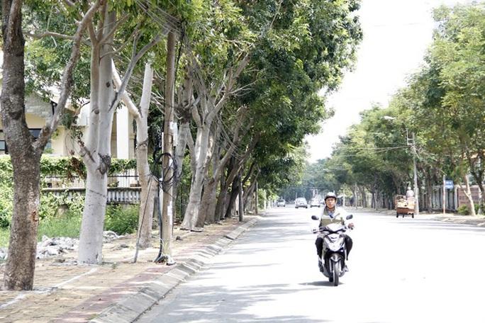 Việc đốn 215 cây sọ khỉ trên đường Nguyễn Văn Hưởng được đề xuất chia làm 3 năm, trong đó năm 2014 đốn 50 cây, năm 2015 đốn 100 cây và năm 2016 đốn 65 cây.