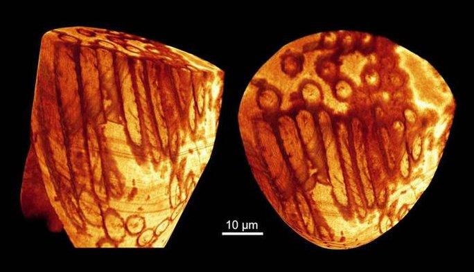 Tinh trùng khổng lồ cổ xưa nhất thế giới