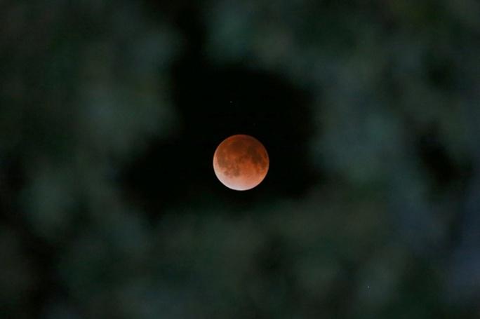 Bóng trái đất in dấu lên mặt trăng nhìn qua cây mộc lan ở Tyler, Texas, Mỹ. Ảnh: AP