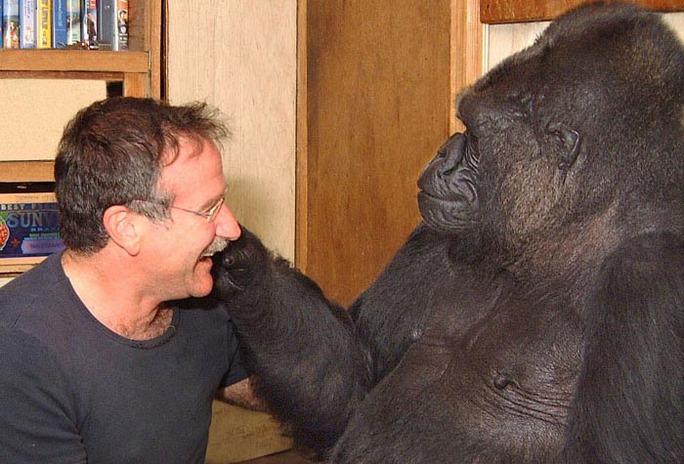 Koko và Robin Williams