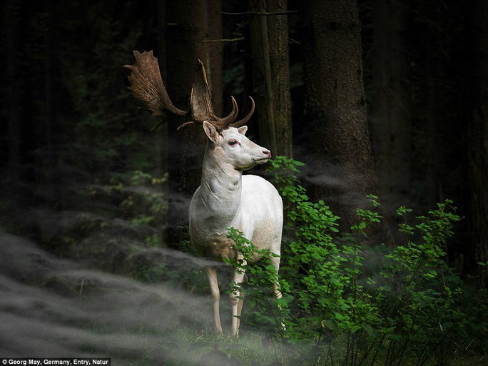 Một bức ảnh đẹp của nhiếp ảnh gia Georg May chụp tại Công viên Quốc gia Eifel.