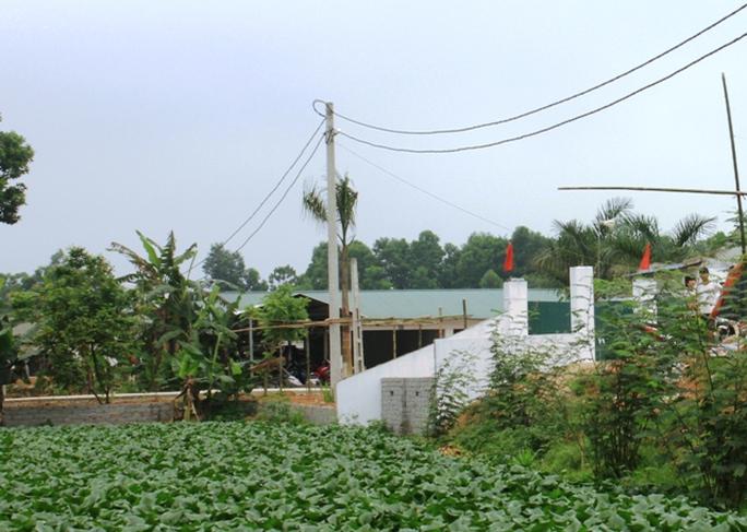 Trang trại nuôi heo của Công ty TNHH PNT