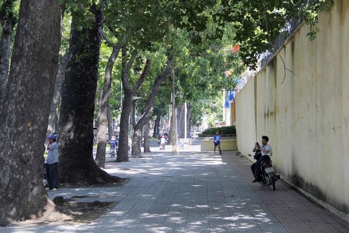 Số cây này sẽ được đốn hạ trong vòng 3 năm tới để nhường chỗ cho việc xây cầu Thủ Thiêm 2 với 6 làn xe, bắt đầu tư giao lộ Nguyễn Hữu Cảnh – Tôn Đức Thắng – Lê Thánh Tôn bắt sang Khu đô thị mới Thủ Thiêm.