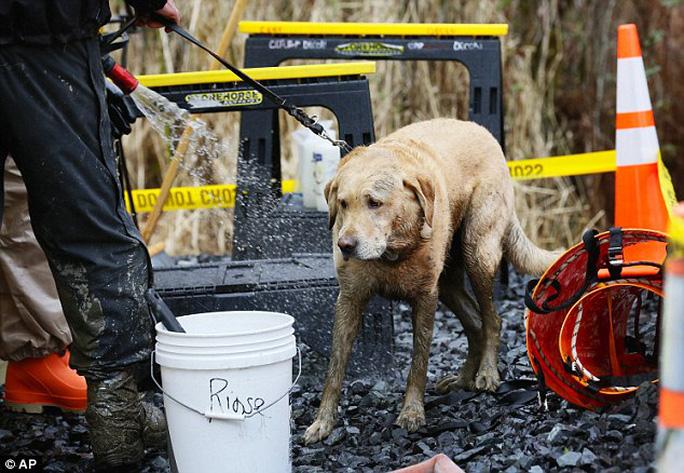 Công tác cứu hộ vẫn đang được triển khai với sự trợ giúp của chó nghiệp vụ. Ảnh: AP