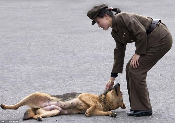 Sói và chó là hai con vật được người dân Triều Tiên ví như người Mỹ. Ảnh: Daily Mail