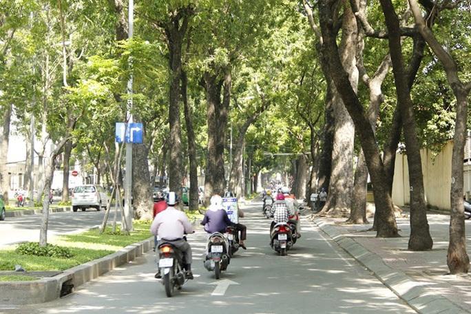 """Ngoài giá trị như một """"lá phổi xanh"""", hàng cổ thụ còn gắn liền với nhiều công trình cổ kính có giá trị lịch sử như nhà máy Ba Son, Đại Chủng Viện Thánh Giuse, Đại học Sài Gòn… hay những công trình hiện đại khác."""