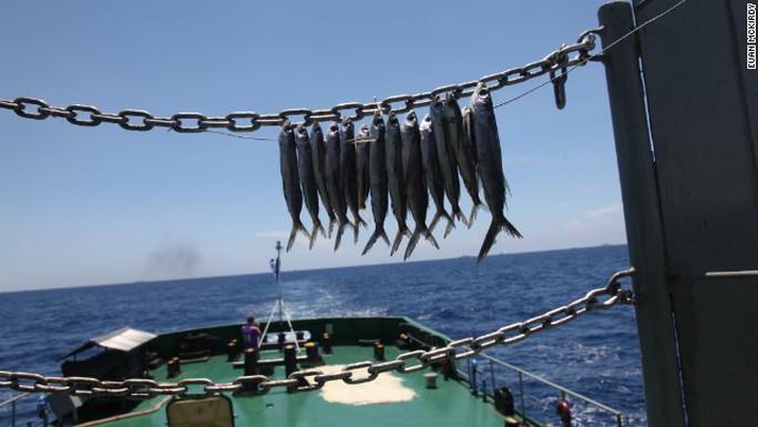Cảnh sát biển Việt Nam phơi cá khô dùng làm lương thực tại chỗ.