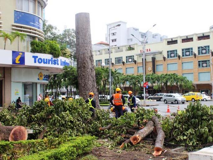 Thân và nhánh cây được chất đốn chờ xe tải đến chở đi