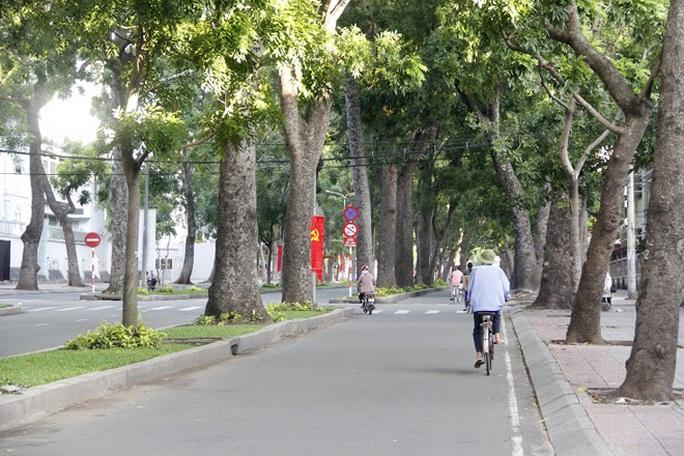 Tôi sống ở đây đã gần 40 năm và cũng chừng đó năm gắn bó với hàng cây xanh mướt này. Nghe tin TP sẽ chặt cây để làm cầu, tôi thực sự tiếc lắm - bác Năm, làm nghề bơm vá xe ở đường Tôn Đức Thắng cho biết.