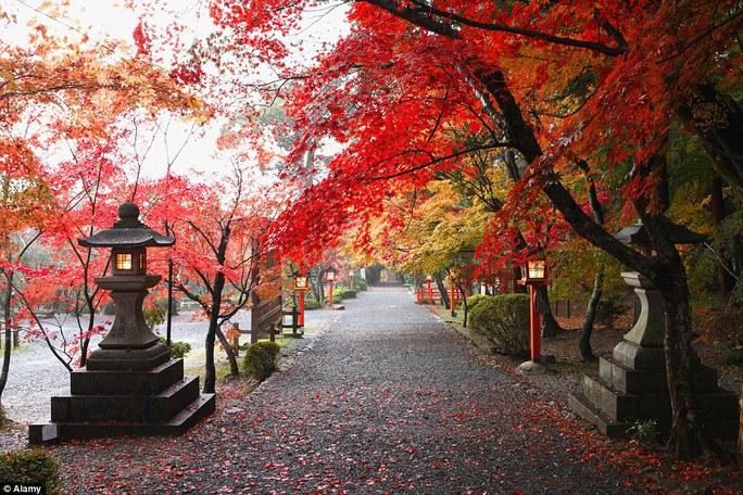 Kyoto - Nhật Bản.
