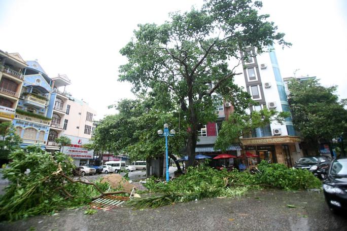 Cây gãy đổ ngổn ngang trên đường phố TP Hạ Long (Quảng Ninh)