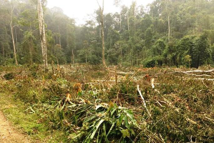Một vụ phá rừng xảy ra tại BQL rừng phòng hộ Sông Lò đầu năm 2014