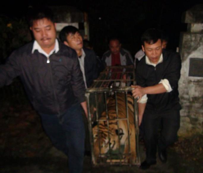 Bàn giao 2 cá thể hổ cho Trung tâm cứu hộ ĐVHD Sóc Sơn.