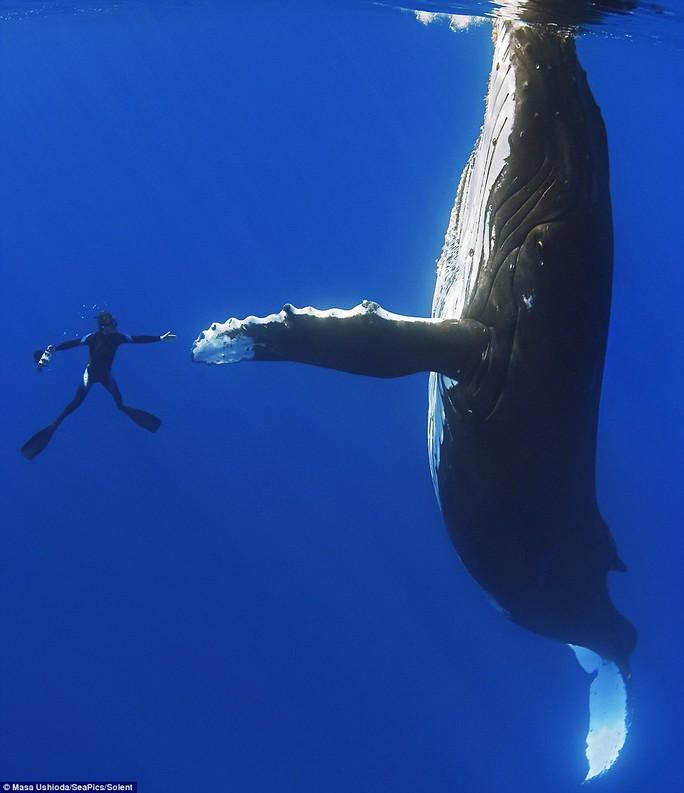 Bức ảnh cá voi bắt tay người độc đáo