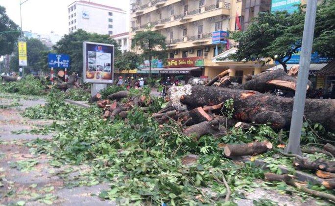 Hà Nội: Hàng chục cây cổ thụ bị đốn hạ