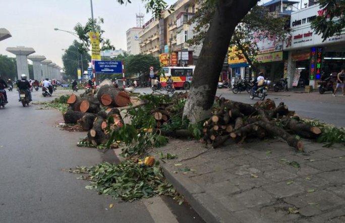 Gốc cây nằm rải rác trên trục đường Nguyễn Trãi từ ngày 2-11 đến nay chờ thu gom