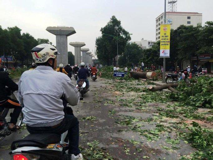 Nhiều người dân đi qua đã không khỏi tiếc nuối trước cảnh hàng cây bị cưa chặt đổ rạp xuống lòng đường