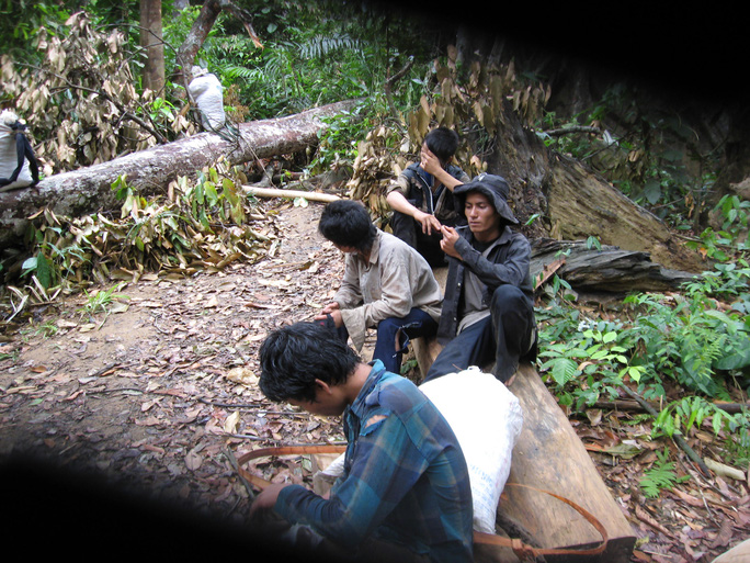 Một nhóm người đi hái quả ươi trong rừng Trà Mi. Ảnh Minh Khang