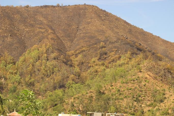 Núi Bà Hỏa trụi lủi sau vụ cháy