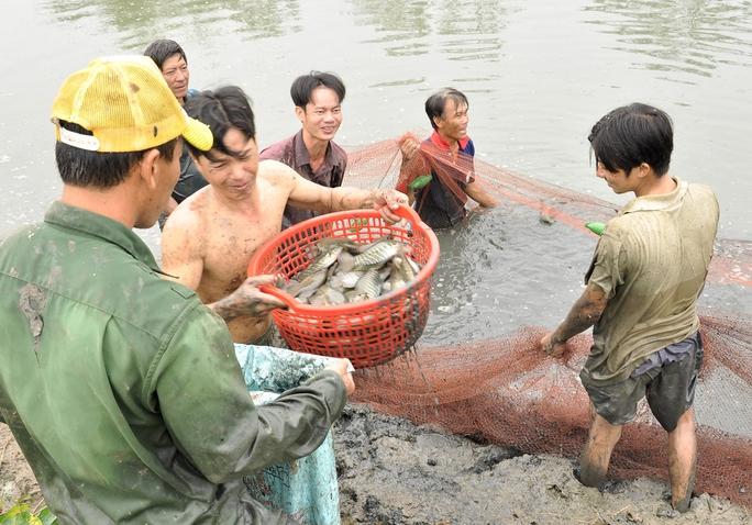 Dùng rỗ xúc cá lên một cách tự nhiên