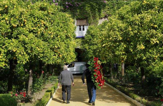 Vòng hoa tang được đưa vào nơi an nghỉ của Nữ công tước xứ Alba. Nguồn: Reuters