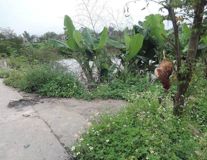 Gà chết treo cây ở thôn Xóm Phường, xã Điện Hòa, huyện Điện Bàn, tỉnh Quảng Nam