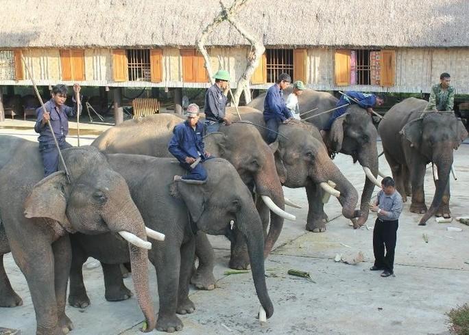 Ông Đàng Năng Long (đứng) bên đàn voi của gia đình