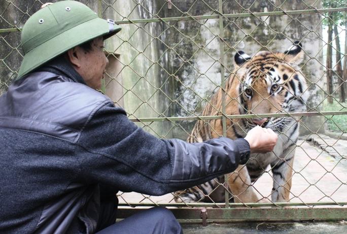 Đột nhập trại nuôi hổ lớn nhất ở Thanh Hóa - Ảnh 13.
