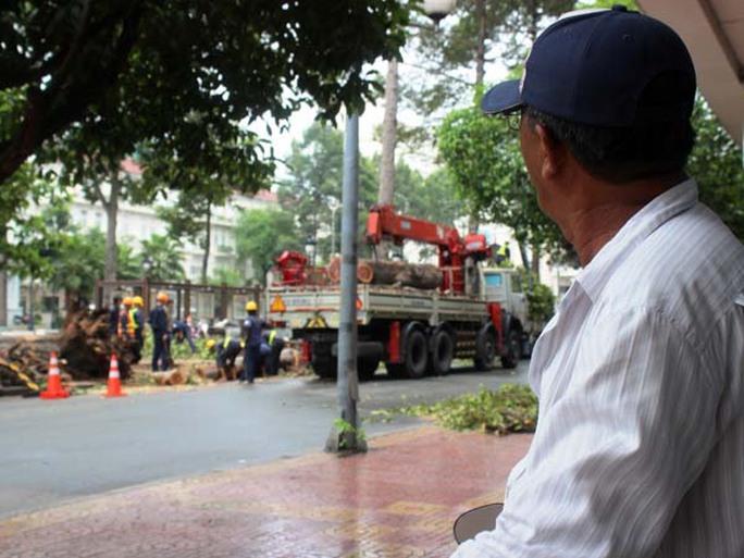Một người đàn ông trung niên lặng lẽ đứng nhìn các công nhân đốn hạ cây