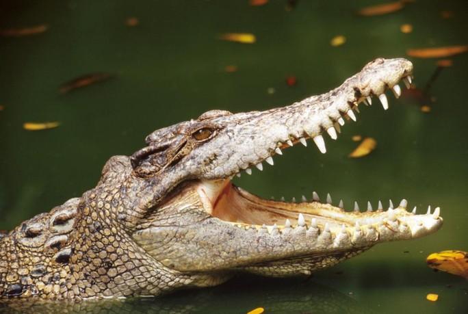 Người dân ở Papua New Guinea thường đối mặt nguy cơ bị cá sấu tấn công. Ảnh minh họa: Istockphoto