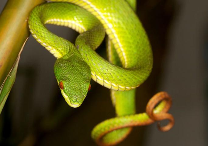 Đầu rắn đã chết vẫn có thể cắn người