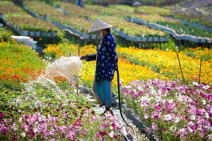 Một góc làng hoa Se Đéc   ẢNH: THANH DŨNG