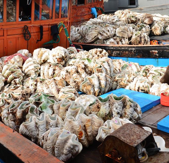 Sò tượng quý hiếm có nguy cơ tiệt chủng bị ngư dân khai thác trái phép