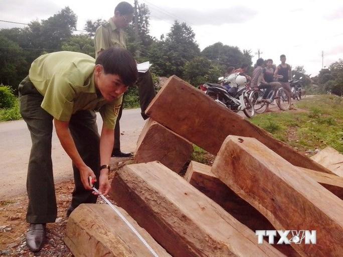 Số gỗ lậu bị bắt giữ. (Ảnh: Hồ Cầu/TTXVN)