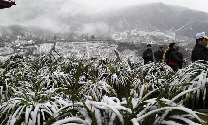 Băng giá và mưa tuyết tại Sa Pa đã thu hút được nhiều du khách trong cả nước đến tham quan