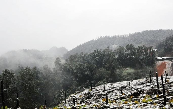 Từ 5h20 sáng, tuyết đã phủ lên ngọn cây, mặt đường ở thị trấn Sapa. Ảnh: Báo Lào Cai.