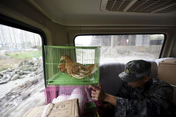 Trung Quốc dùng gà, thỏ, bồ câu trấn an người dân Thiên Tân