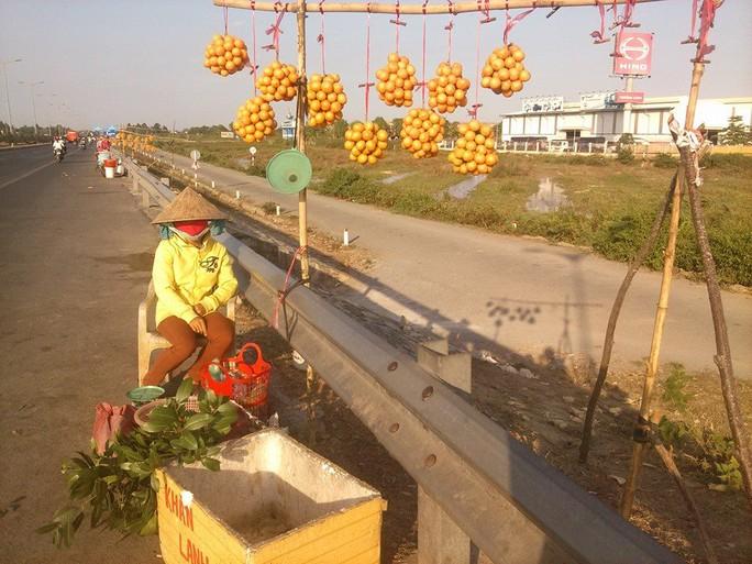 Hàng loạt điểm bán thanh trà và cây giống mọc lên dưới dốc cầu Cần Thơ