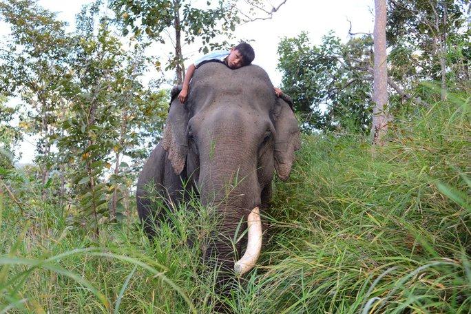 Cậu bé sống, khóc và cười cùng voi