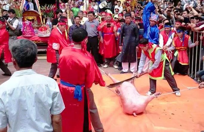 Mặc cho dư luận tranh cãi, lễ chém lợn vẫn diễn ra