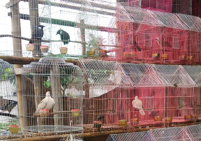 Chim hoang dã được bày bán công khai trong khi đó ở xã này đang có dịch cúm A/H5N6 rất nguy hiểm