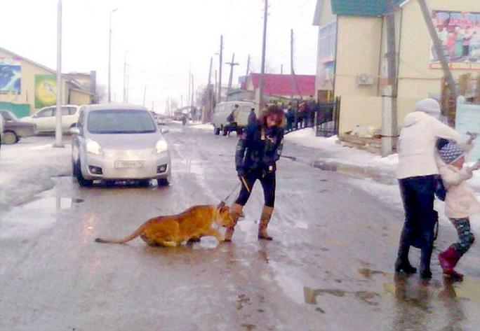Bé gái bị sư tử tấn công. Ảnh: Daily Mail