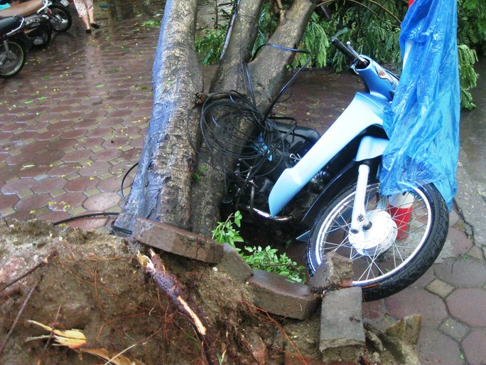 Cây đổ đè xe máy