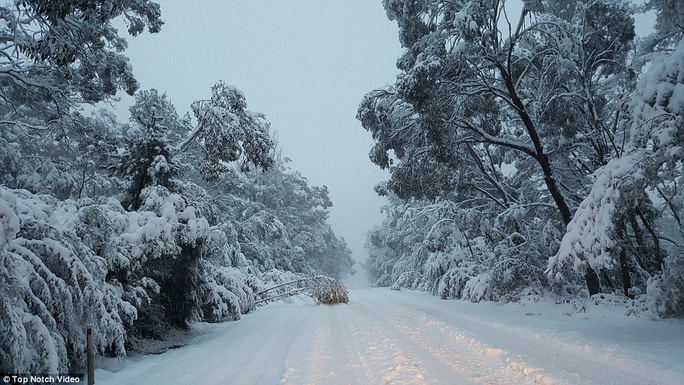Residents across Queensland, New South Wales and Victoria will rise to find a thick blanket of snow has fallen along the eastern coast after reaching sub-zero temperatures overnight