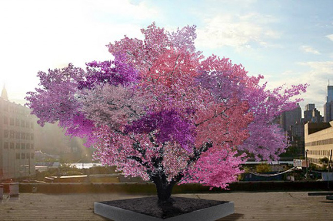 Loài cây một năm ra 40 loại quả khác nhau là chuyện lạ đối với nhiều người. Ảnh Iflscience