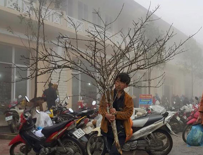 Thiếu niên người Mông với cành đào rừng Sa Pa đang đợi khách mua
