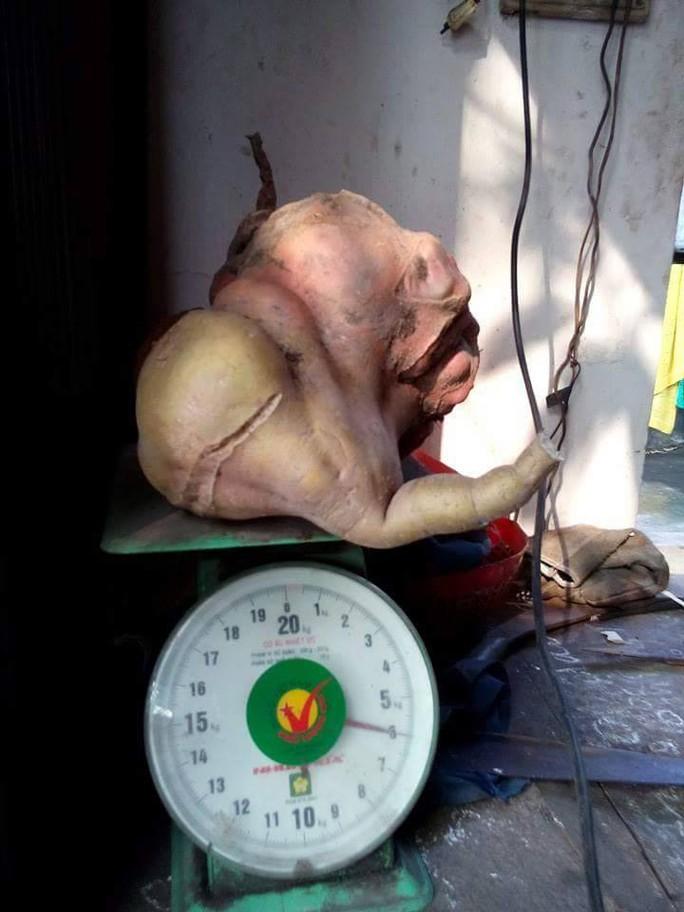 Củ khoai lang nặng đúng 6kg