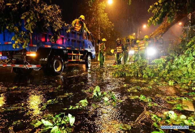 Xử lý cây ngã do siêu bão Soudelor