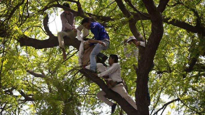 Những người đàn ông trèo lên cây ngăn ông Gajender Singh tự tử nhưng không thành Ảnh: AP